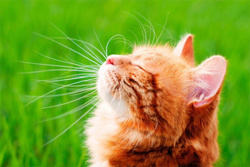gato-blog