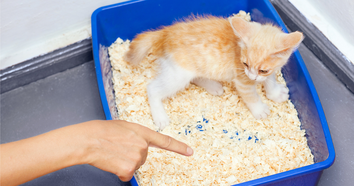Little cat inside the litter box