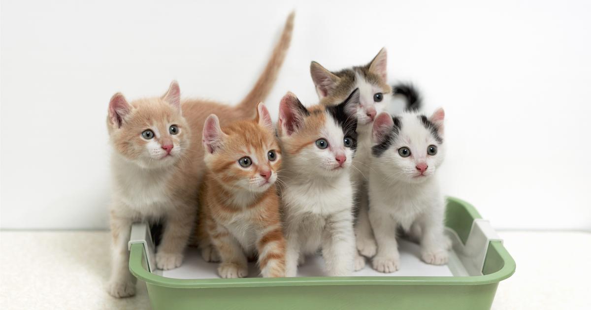 che tipo di lettiera per gatti dovrei comprare sepicat