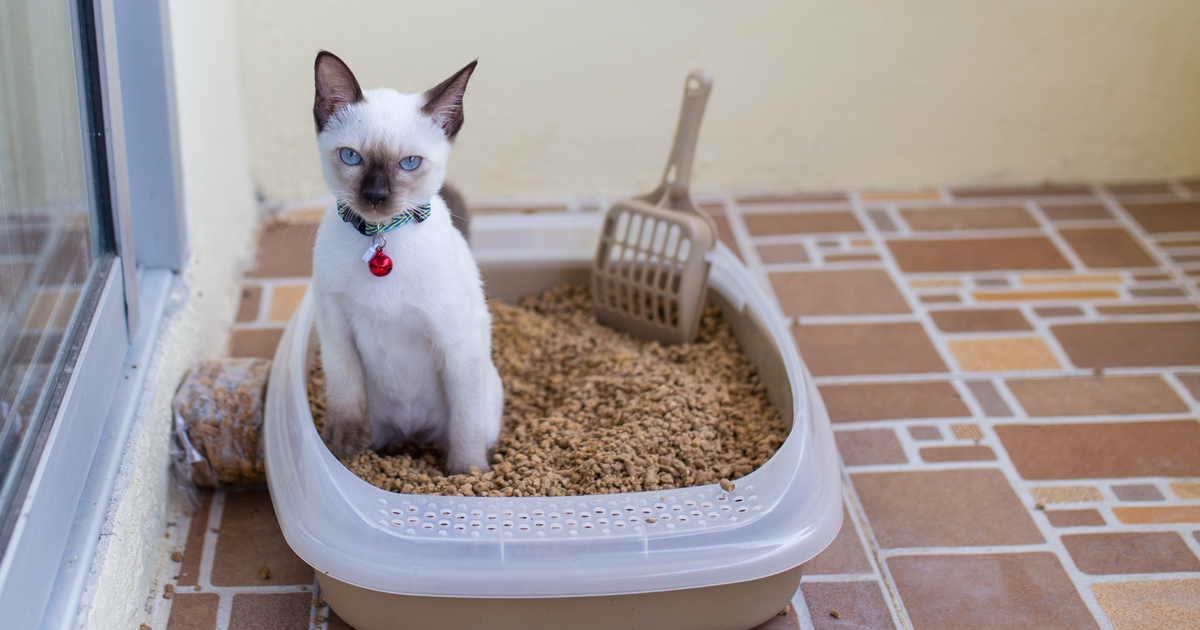 Little white cat inside the litter box