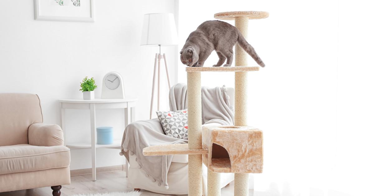 Gato gris en un rascador en una habitación blanca