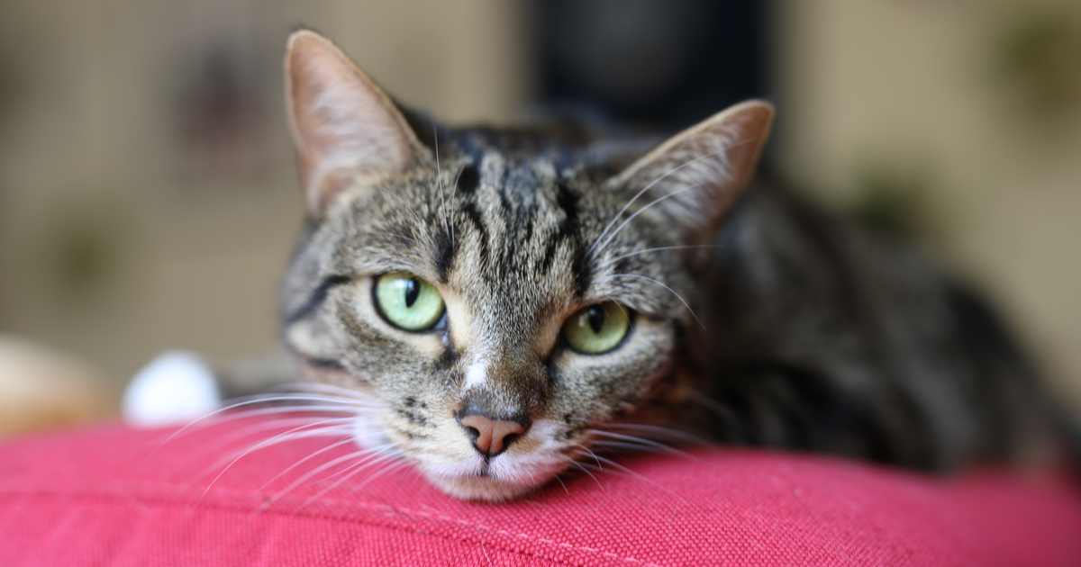Résultat de recherche d'images pour gatos en otoño
