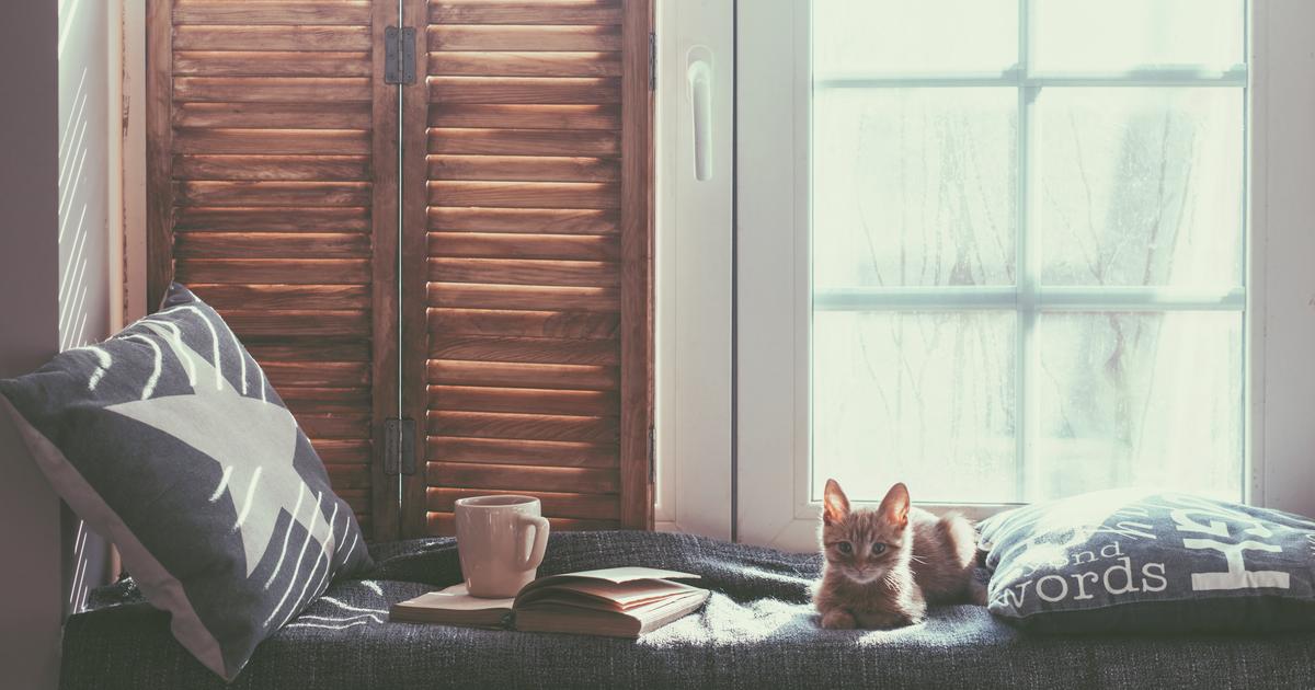 Gato protegiendose del frío en casa