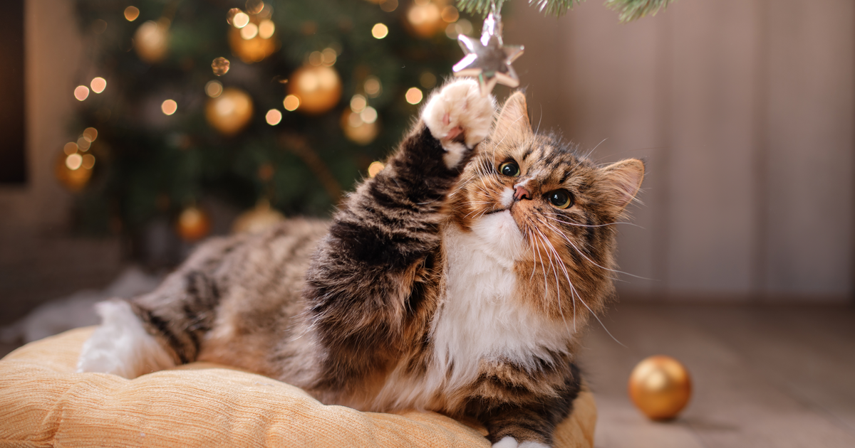Cat playing under the Christmas tree