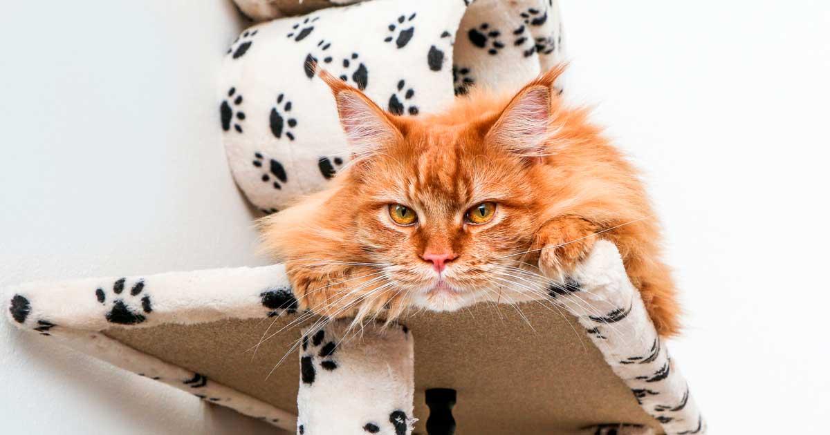 Gato naranja encima de un rascador