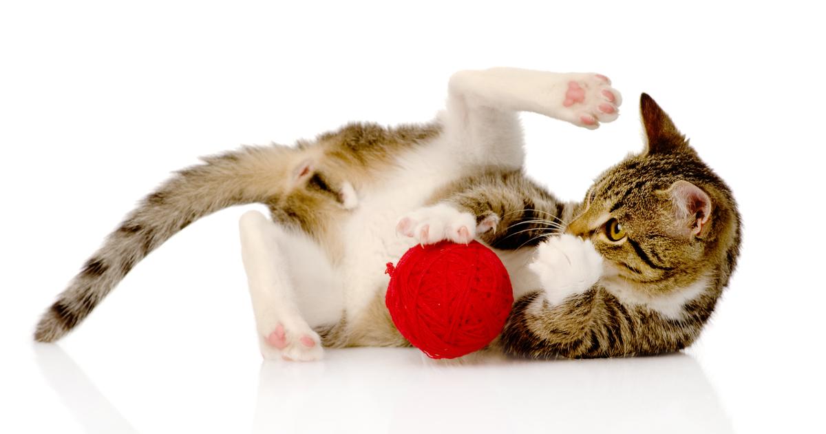 Gato jugando con un juguete, una pelota roja