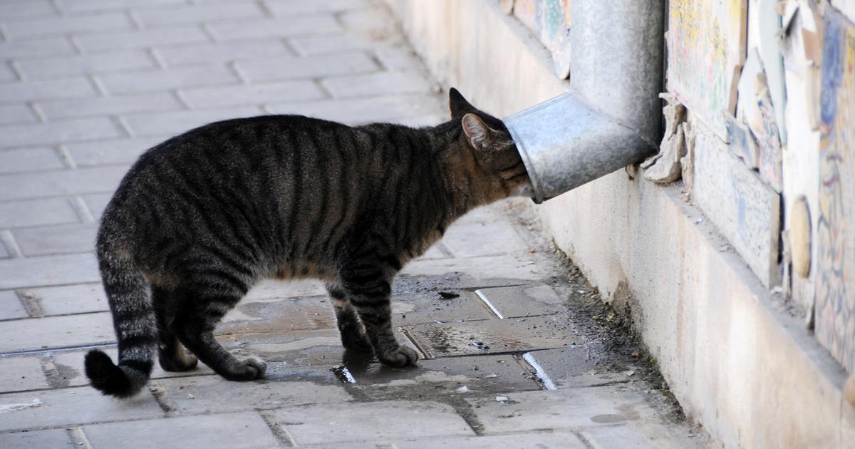 Gato perdido en la calle
