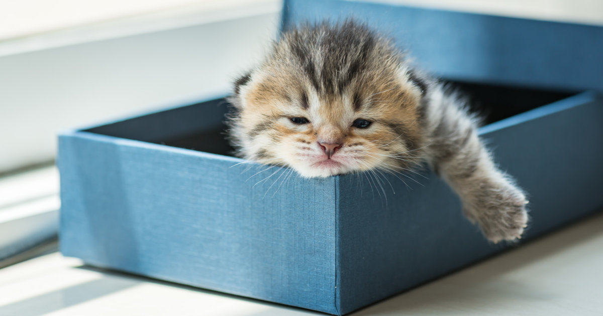 Why does my cat sleep in the litter box? - Sepicat