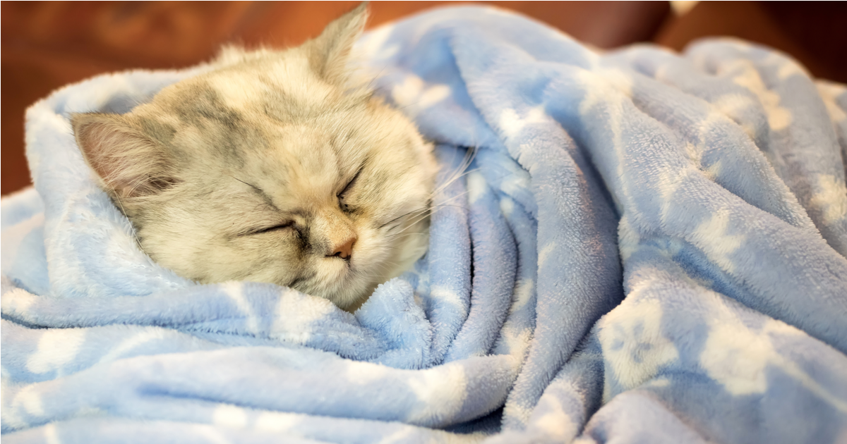 Cat sleeping wrapped in a blanket