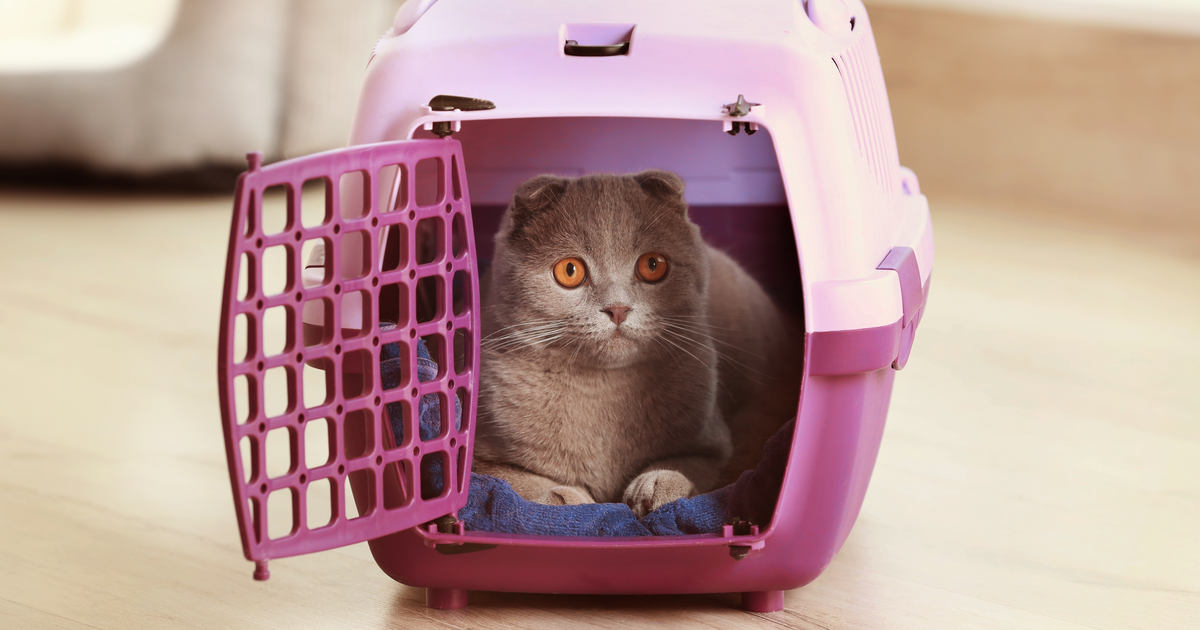 Cat inside a pink carrier