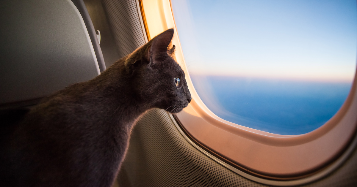 Cat in holidays in an airplane