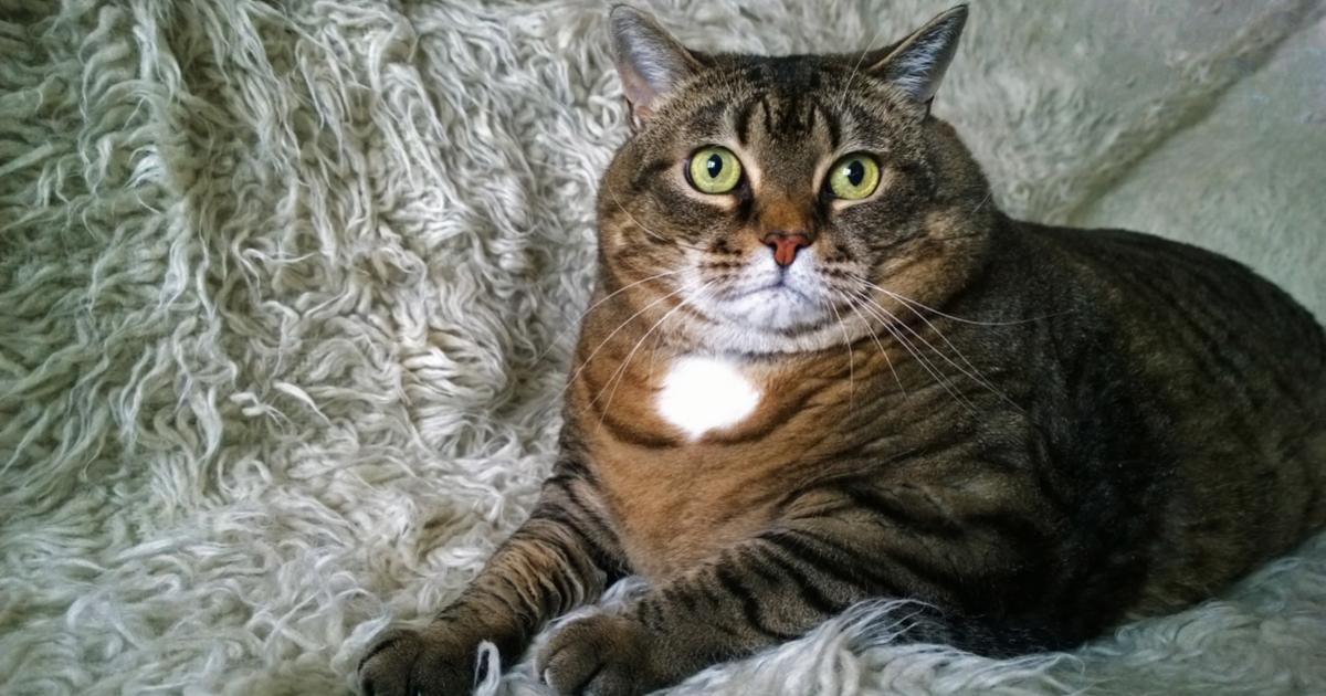Cuidados para gatos Archivos - Sepicat