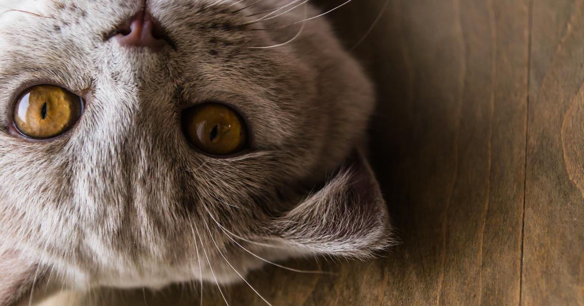 como cuidar un gato